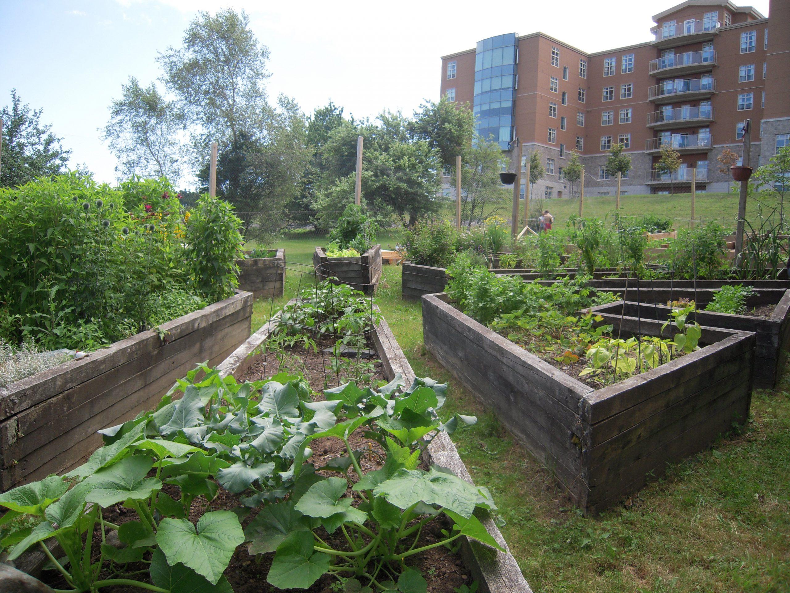 Community Garden Inside (large)