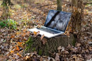 Laptop on a Tree Trunk